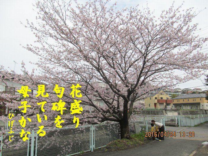 20160404kata03.jpg