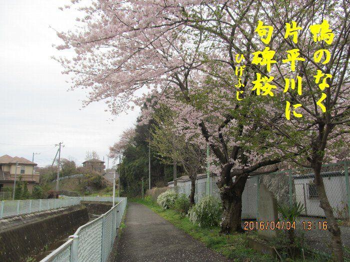 20160404kata04.jpg