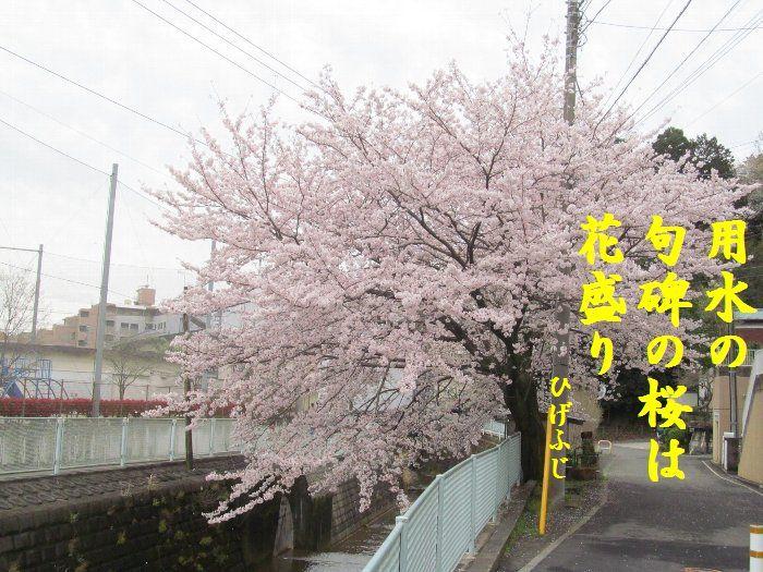 20160404kata08.jpg