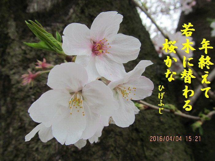 20160404kata09.jpg