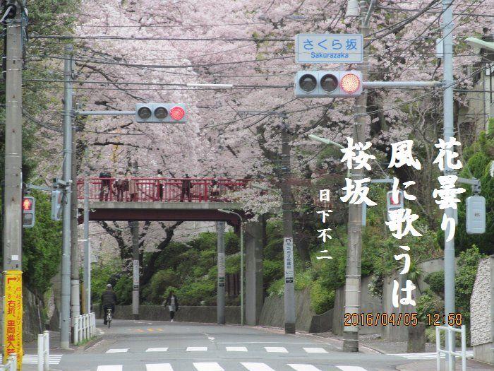 20160405sakurasaka01.jpg