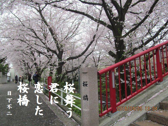 20160405sakurasaka02a.jpg