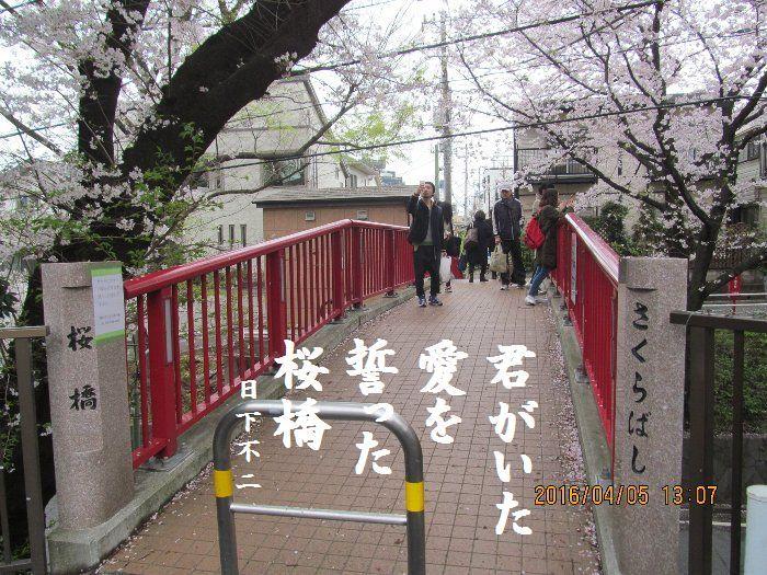20160405sakurasaka03.jpg