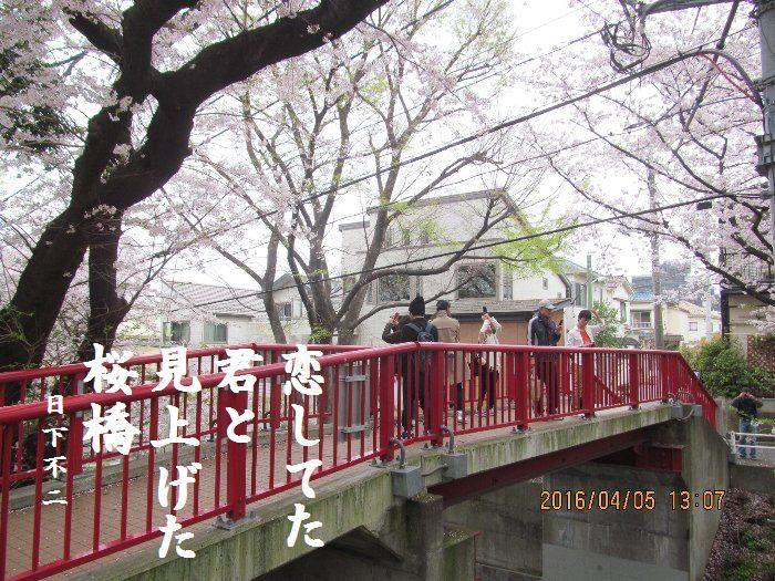 20160405sakurasaka04.jpg