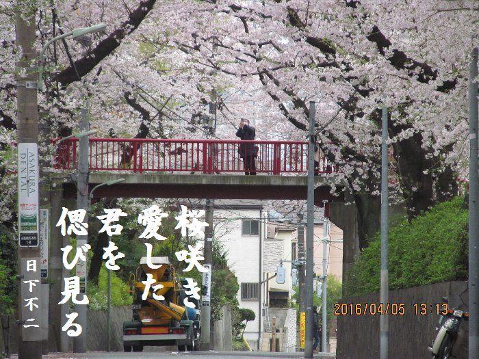 20160405sakurasaka06.jpg