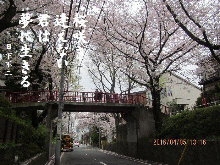 20160405sakurasaka08.jpg