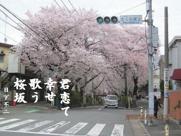 20160405sakurasaka10.jpg
