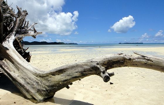 「名指しの支援要請!?」島国パラオ…干ばつ続き完全断水の危機迫る