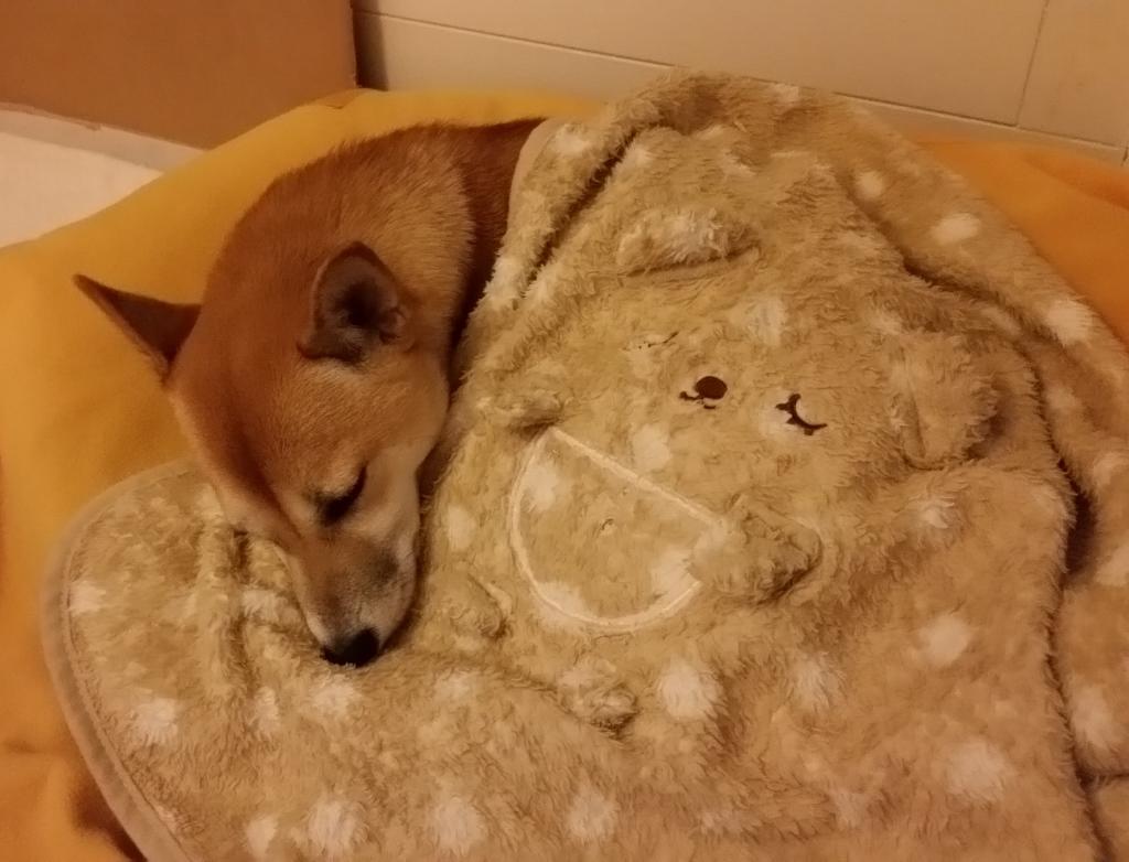 bed (1) (1024x782)