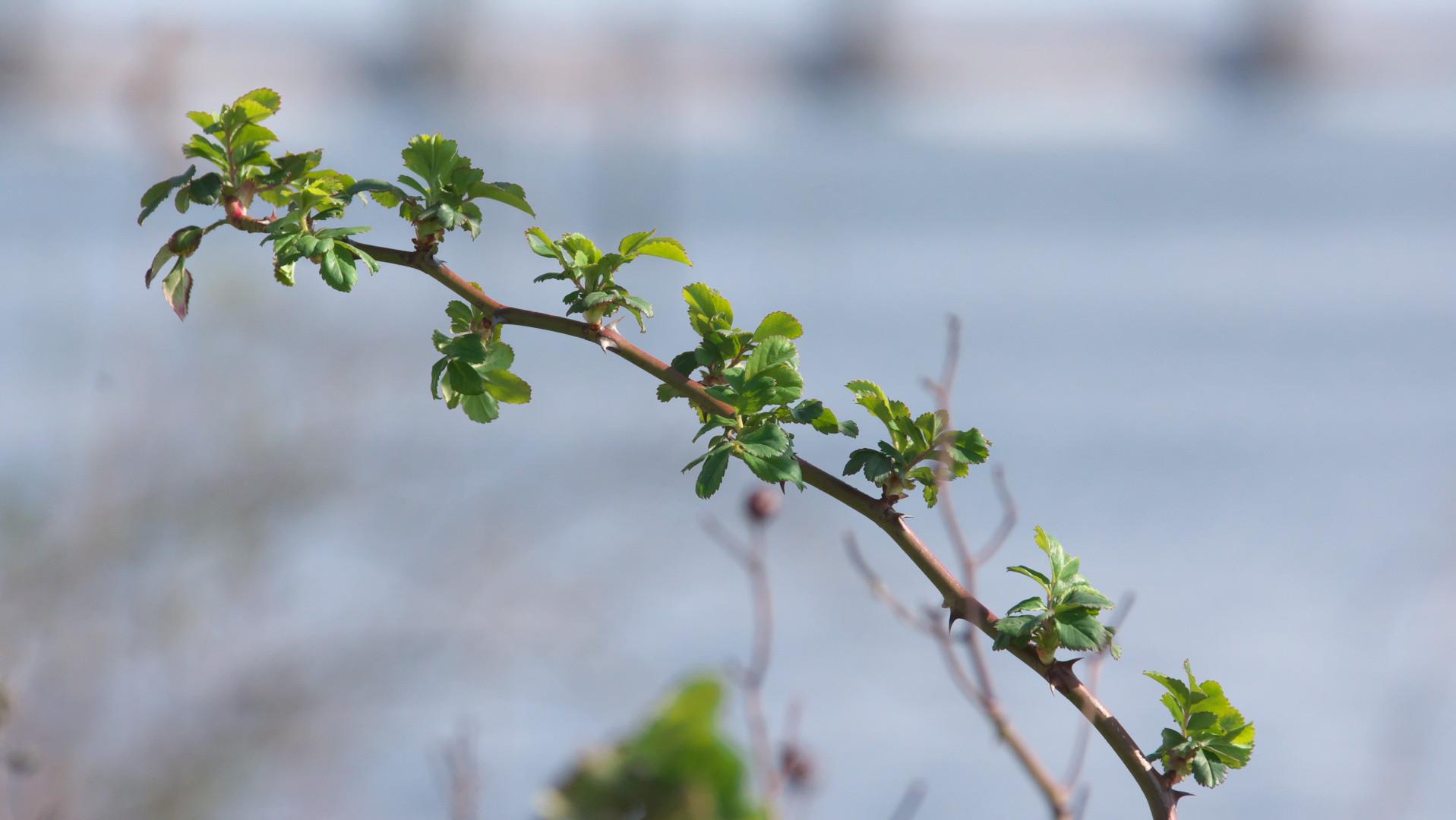 常陸川、春の兆し