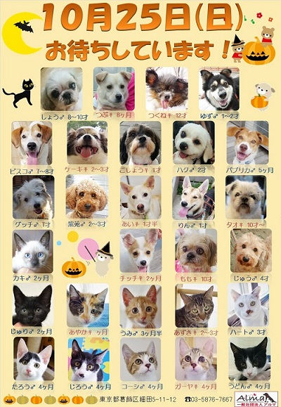 ALMA ティアハイム 10月25日 参加犬猫一覧