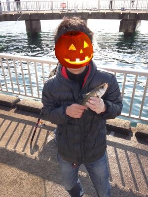 かぼちゃ釣り