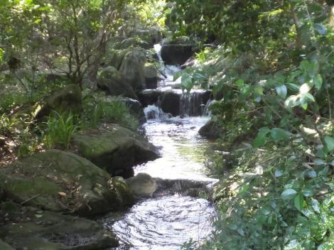 泉の森・引地川泉の滝