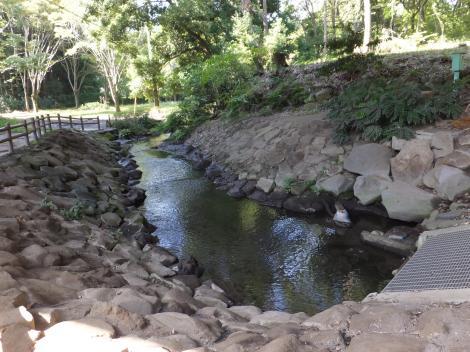 泉の森の引地川