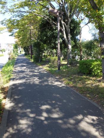 藤沢自転車道