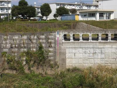 境川の遊水池越流堤・鶴金橋上流
