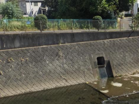 境川旧河道・鶴金橋下流