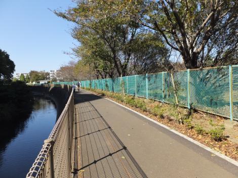 境川橋上流左岸の桜並木