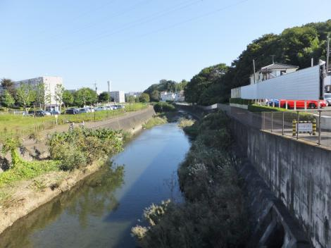 境橋より境川下流を望む
