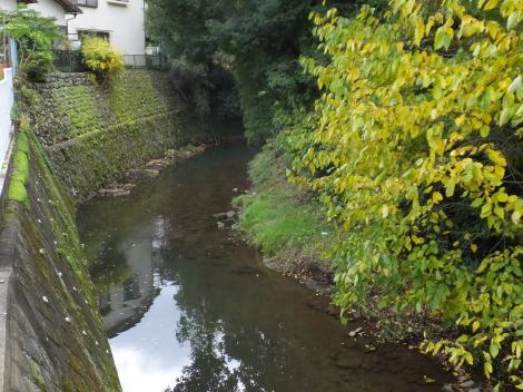 境川・長寿橋より上流を望む