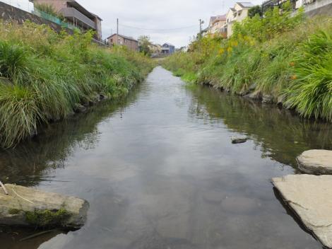 境川・新田橋上流