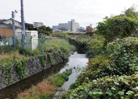風戸橋水位監視カメラ