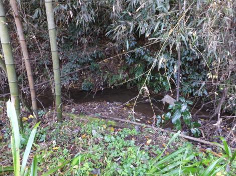 境川水系本沢・相模原市緑区川尻雨降