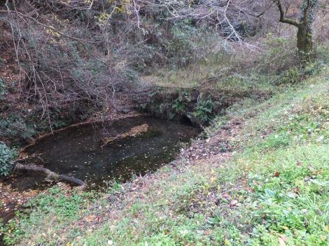 境川水系本沢源流