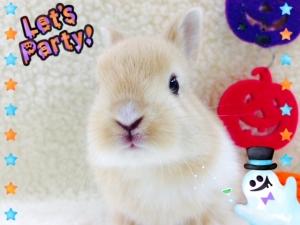 ミニウサギ2