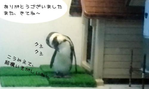 ペンギンのいるバー_9