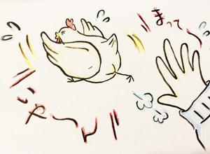 H27 逃げる鶏