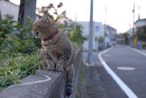 豊玉北の猫