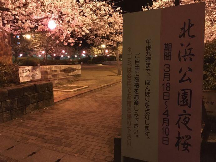 160401-1_夜桜