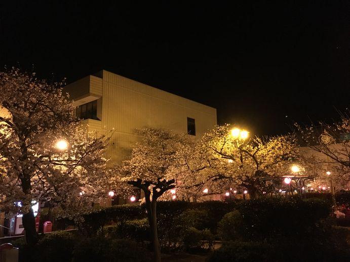 160401-3_夜桜