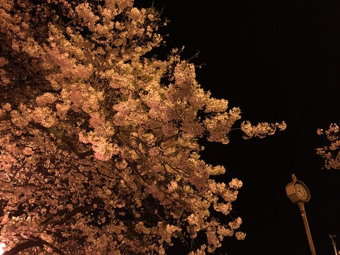 160401-4_夜桜
