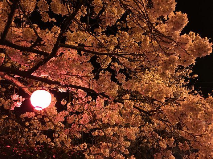 160401-6_夜桜
