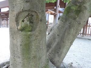 熱田神宮木の根blog03