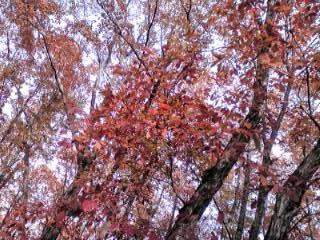 北軽の秋2