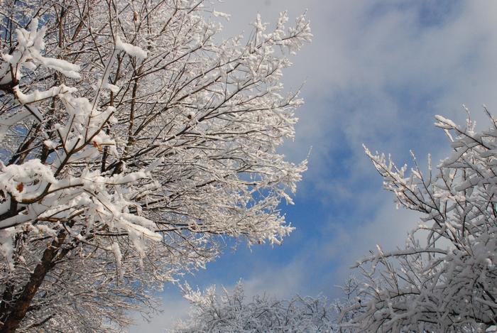 雪景色17