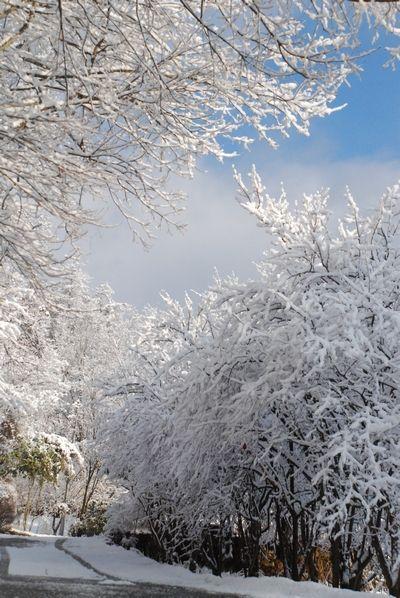 雪景色22