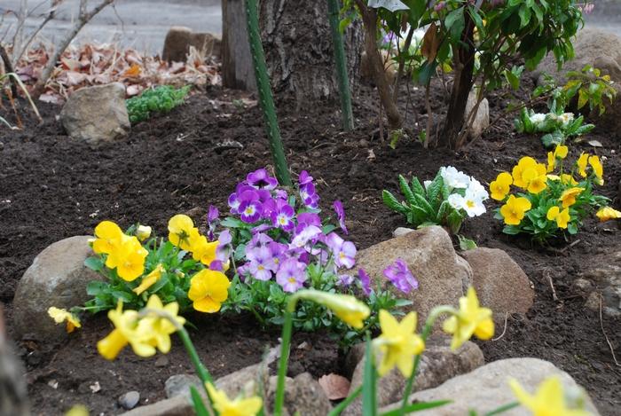 小さな花壇1