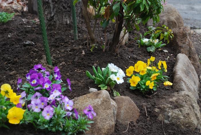 小さな花壇2