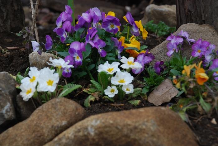 小さな花壇5