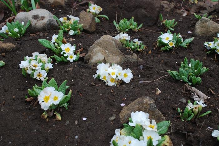 小さな花壇6