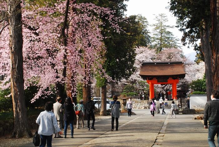 恵林寺の桜23