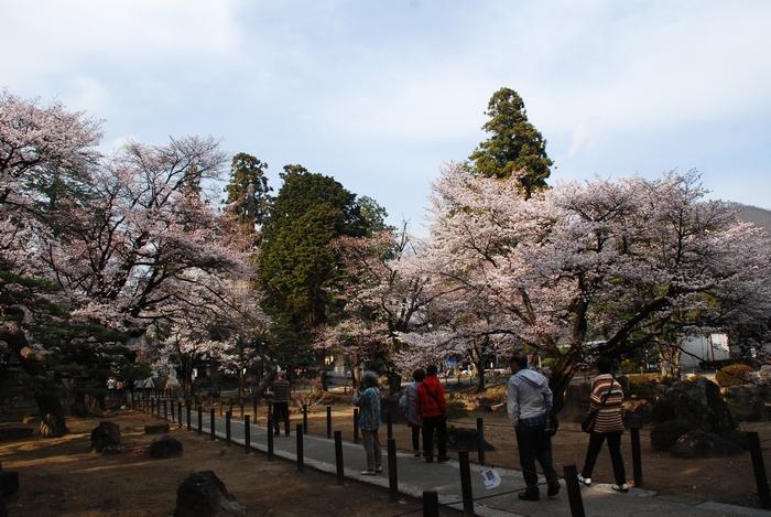 恵林寺の桜39