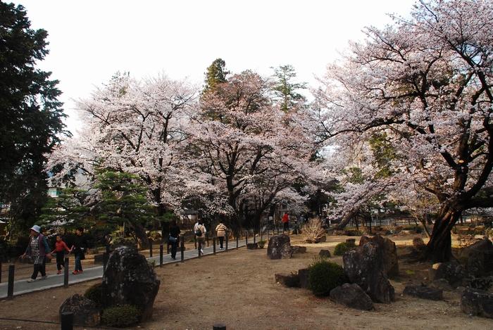 恵林寺の桜47
