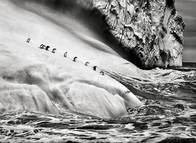 bw 氷山上のペンギン, 南極近く、サウスサンドウィッチ諸島 2009