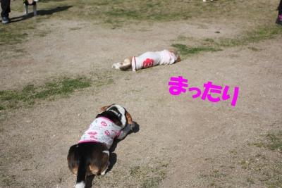 20160326めぐちゃんと