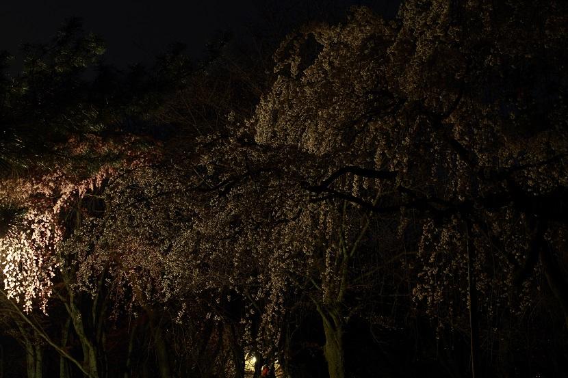京都御苑、1